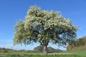 Frühjahrs-Impression