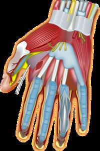 Gelenke, Sehnen und Muskeln werden als Deponien benutzt!